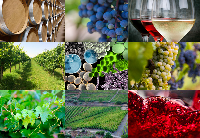 Viticulture & Oenology